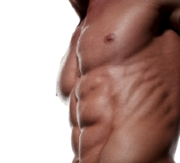 The side oblique muscles