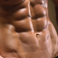 The lower abdominal muscles